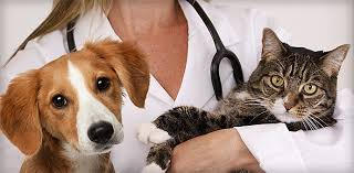 if you are thinking about becoming a licensed veterinarian technician you must have a passion for animals if you are already employed