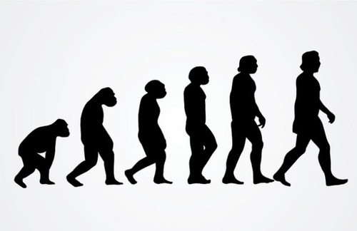 Classic picture of Human evolution
