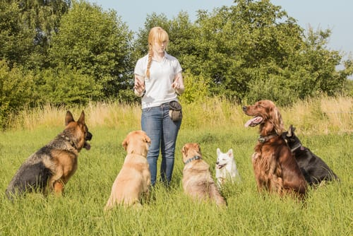 dog obedience trainer instructor trade schools
